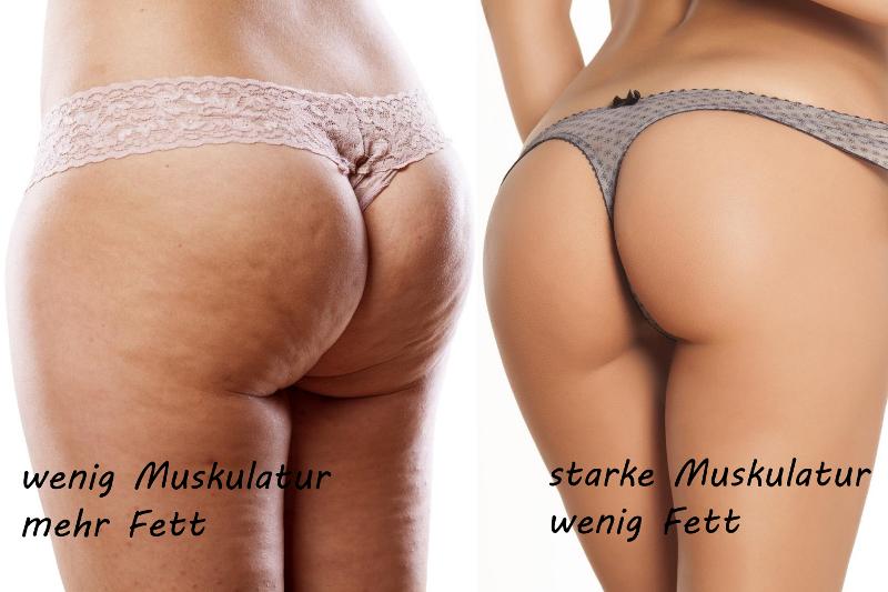 Vergleich Fett Muskulatur